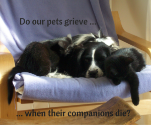 Do our pets grieve when their companions die?