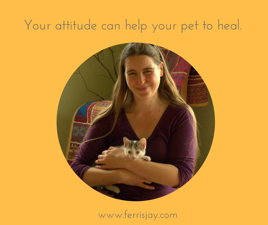 your attitude affects your pets